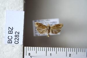 (Eucosma conformana - CCDB-11133-H08)  @13 [ ] Copyright  B. Zlatkov 2011 Unspecified