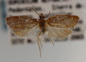 (Claduncaria - KAA_DNA_00047)  @11 [ ] Copyright (c) (2019) John Rawlins Carnegie Museum of Natural History
