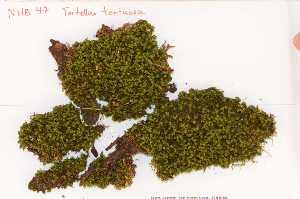 (Pottiales - Robillard_EMPM67_CAN)  @13 [ ] Copyright (2012) Canadian Museum of Nature Canadian Museum of Nature