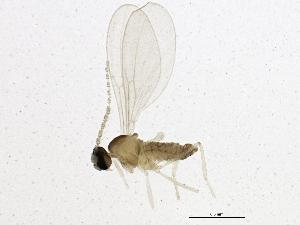 (Heterogenella - BIOUG02006-C02)  @13 [ ] CC-0 (2012) CBG Photography Group Centre for Biodiversity Genomics
