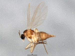 ( - BIOUG01926-A02)  @13 [ ] CC-0 (2012) CBG Photography Group Centre for Biodiversity Genomics