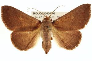(Panopoda - BIOUG02040-B03)  @15 [ ] CreativeCommons - Attribution Non-Commercial Share-Alike (2012) CBG Photography Group Centre for Biodiversity Genomics