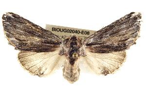 ( - BIOUG02040-E08)  @14 [ ] CreativeCommons - Attribution Non-Commercial Share-Alike (2012) CBG Photography Group Centre for Biodiversity Genomics