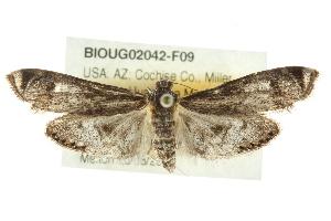 (Petrophila - BIOUG02042-F09)  @15 [ ] CreativeCommons - Attribution Non-Commercial Share-Alike (2012) CBG Photography Group Centre for Biodiversity Genomics