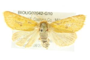 (Nocloa nanata - BIOUG02042-G10)  @15 [ ] CreativeCommons - Attribution Non-Commercial Share-Alike (2012) CBG Photography Group Centre for Biodiversity Genomics