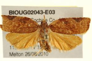 ( - BIOUG02043-E03)  @11 [ ] CreativeCommons - Attribution Non-Commercial Share-Alike (2012) CBG Photography Group Centre for Biodiversity Genomics