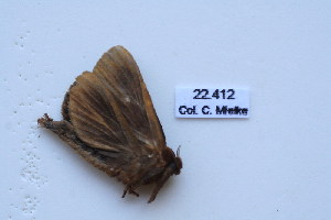 (Dalaca - BC-CGCM-22.412)  @12 [ ] Copyright (2010) Carlos Mielke Research Collection of Carlos Mielke