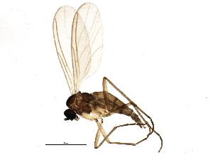 (Camptochaeta uniformis - BIOUG05825-B05)  @14 [ ] CC-0 (2014) CBG Photography Group Centre for Biodiversity Genomics