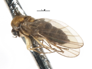 ( - CNC DIPTERA 103263)  @11 [ ] CreativeCommons - Attribution Non-Commercial Share-Alike (2011) CNC/BIO Photography Group Centre for Biodiversity Genomics