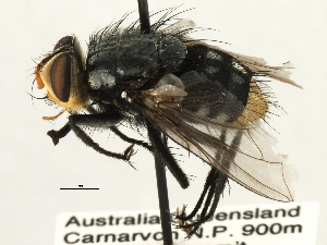 (Zita - CNC DIPTERA 197411)  @13 [ ] CreativeCommons - Attribution Non-Commercial Share-Alike (2013) BIO Photography Group/CNC Centre for Biodiversity Genomics