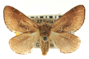( - CNCLEP00098836)  @15 [ ] CreativeCommons - Attribution Non-Commercial Share-Alike (2013) BIO Photography Group/CNC Centre for Biodiversity Genomics