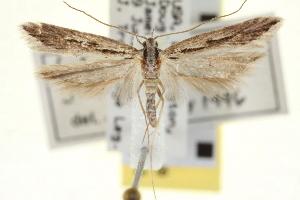 (Prolita jubata - CNCLEP00100539)  @13 [ ] CreativeCommons - Attribution Non-Commercial Share-Alike (2013) BIO Photography Group/CNC Centre for Biodiversity Genomics