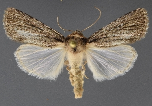 ( - DLWC011048)  @11 [ ] CreativeCommons – Attribution (by) (2019) David Wikle Canadian National Collection of Insects and Nematodes