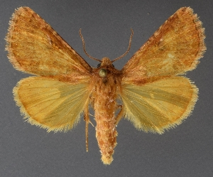 ( - DLWC011063)  @11 [ ] CreativeCommons – Attribution (by) (2019) David Wikle Canadian National Collection of Insects and Nematodes