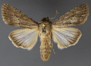 ( - DLWC011210)  @11 [ ] CreativeCommons – Attribution (by) (2019) David Wikle Canadian National Collection of Insects and Nematodes