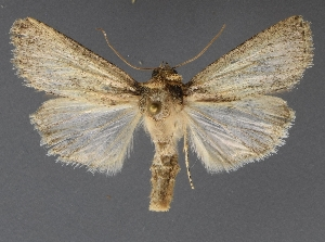 ( - DLWC011568)  @11 [ ] CreativeCommons – Attribution (by) (2019) David Wikle Canadian National Collection of Insects and Nematodes