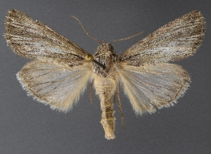 ( - DLWC011595)  @11 [ ] CreativeCommons – Attribution (by) (2019) David Wikle Canadian National Collection of Insects and Nematodes