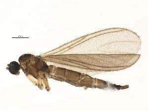 (Claustropyga aperta - BIOUG07122-G04)  @13 [ ] CC-0 (2014) CBG Photography Group Centre for Biodiversity Genomics