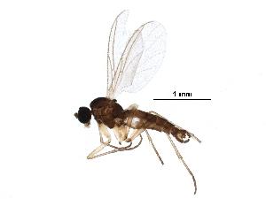(Dichopygina duplicis - BIOUG10043-B01)  @14 [ ] CC-0 (2016) CBG Photography Group Centre for Biodiversity Genomics