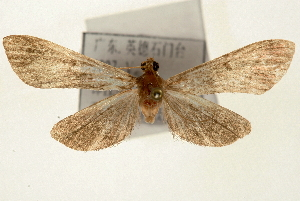 (Bradina melanoperas - Pyr000882)  @15 [ ] Copyright (2010) Zhaofu Yang Northwest Agriculture and Forest University