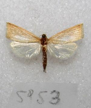 "( - MACN-Bar-Lep-ct 05953)  @11 [ ] Copyright (2014) MACN Museo Argentino de Ciencias Naturales ""Bernardino Rivadavia"""
