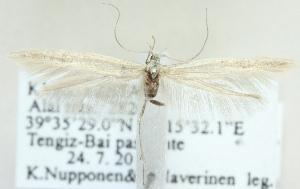 (Coleophora magyarica - MM20391)  @13 [ ] CreativeCommons - Attribution Non-Commercial (2012) Marko Mutanen University of Oulu
