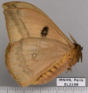 ( - EL2198)  @12 [ ] CreativeCommons (2015) MNHN Muséum national d'Histoire naturelle