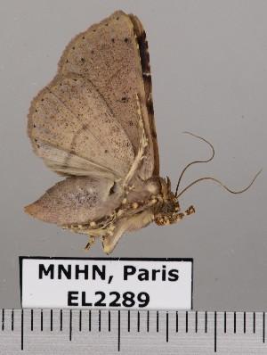 ( - EL2289)  @14 [ ] CreativeCommons - Attribution (2015) MNHN Muséum national d'Histoire naturelle