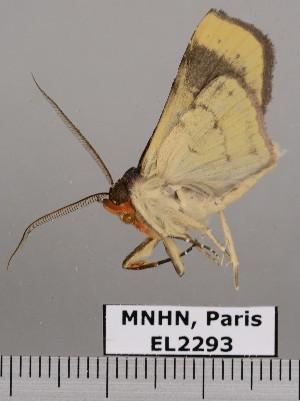 ( - EL2293)  @13 [ ] CreativeCommons (2015) MNHN Muséum national d'Histoire naturelle