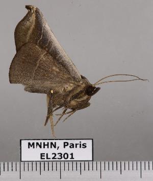 ( - EL2301)  @11 [ ] CreativeCommons (2015) MNHN Muséum national d'Histoire naturelle
