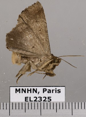 ( - EL2325)  @13 [ ] CreativeCommons (2015) MNHN Muséum national d'Histoire naturelle