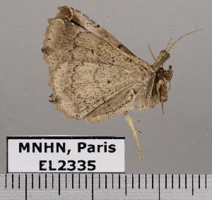 ( - EL2335)  @13 [ ] CreativeCommons (2015) MNHN Muséum national d'Histoire naturelle