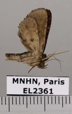 ( - EL2361)  @14 [ ] CreativeCommons (2015) MNHN Muséum national d'Histoire naturelle