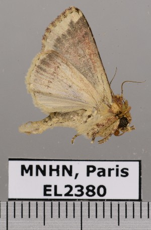 ( - EL2380)  @14 [ ] CreativeCommons (2015) MNHN Muséum national d'Histoire naturelle
