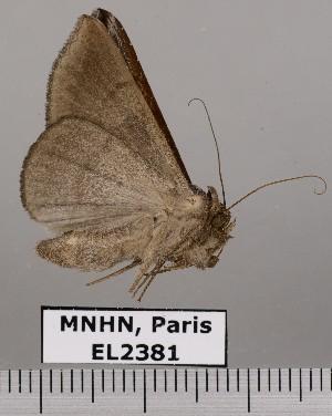 ( - EL2381)  @13 [ ] CreativeCommons - Attribution (2015) MNHN Muséum national d'Histoire naturelle