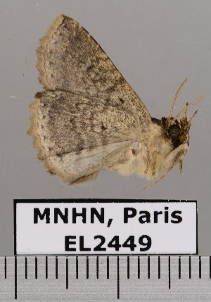 ( - EL2449)  @13 [ ] CreativeCommons (2015) MNHN Muséum national d'Histoire naturelle
