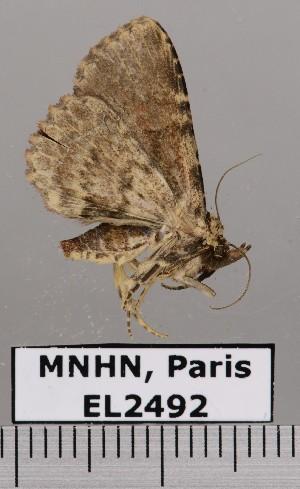 ( - EL2492)  @12 [ ] CreativeCommons (2015) MNHN Muséum national d'Histoire naturelle