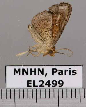( - EL2499)  @13 [ ] CreativeCommons - Attribution (2015) MNHN Muséum national d'Histoire naturelle