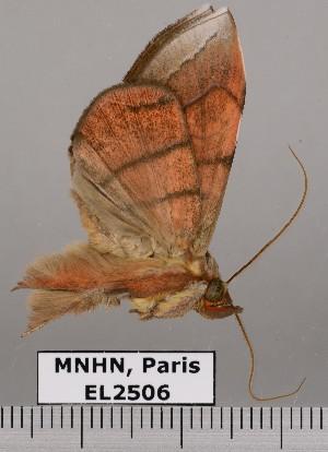(Argidia sp. JB1477 - EL2506)  @14 [ ] CreativeCommons (2015) MNHN Muséum national d'Histoire naturelle