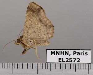 ( - EL2572)  @13 [ ] CreativeCommons (2015) MNHN Muséum national d'Histoire naturelle