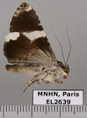 ( - EL2639)  @12 [ ] CreativeCommons (2015) MNHN Muséum national d'Histoire naturelle