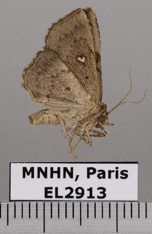 ( - EL2913)  @14 [ ] CreativeCommons - Attribution (2015) MNHN Muséum national d'Histoire naturelle