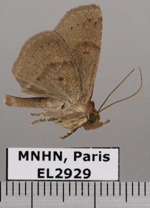 ( - EL2929)  @11 [ ] CreativeCommons - Attribution (2015) MNHN Muséum national d'Histoire naturelle