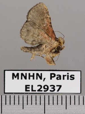 ( - EL2937)  @13 [ ] CreativeCommons (2015) MNHN Muséum national d'Histoire naturelle