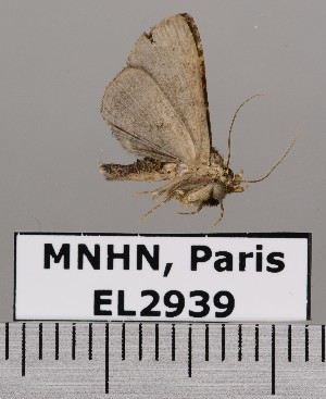 ( - EL2939)  @13 [ ] CreativeCommons (2015) MNHN Muséum national d'Histoire naturelle