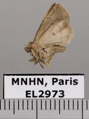 ( - EL2973)  @12 [ ] CreativeCommons (2015) MNHN Muséum national d'Histoire naturelle