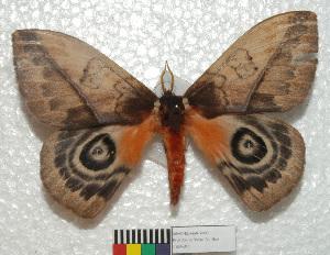 ( - MHNC-ELH-BAR 0092)  @14 [ ] CreativeCommons - Attribution Non-Commercial (2012) Arturo Munos Saravia Museo de Historia Natural Alcide d'Orbigny