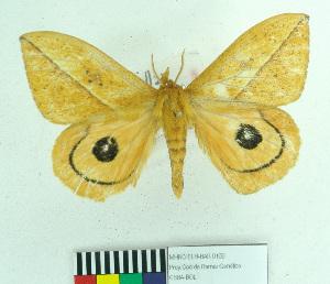 ( - MHNC-ELH-BAR 0169)  @12 [ ] CreativeCommons - Attribution Non-Commercial (2012) Arturo Munos Saravia Museo de Historia Natural Alcide d'Orbigny
