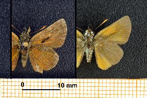 ( - RVcoll.08-M023)  @12 [ ] Copyright (2013) Roger Vila Institute of Evolutionary Biology