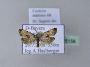 ( - BC ZSM Lep 25156)  @13 [ ] Copyright (2010) Axel Hausmann/Bavarian State Collection of Zoology (ZSM) SNSB, Zoologische Staatssammlung Muenchen